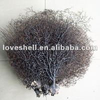 Black Sea Fan For Home Decoration