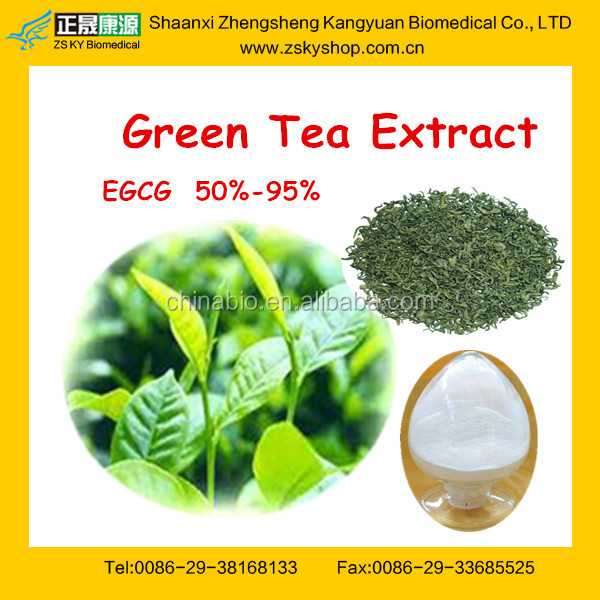 Top Quality Tea Polyphenol Green Tea Extract Powder