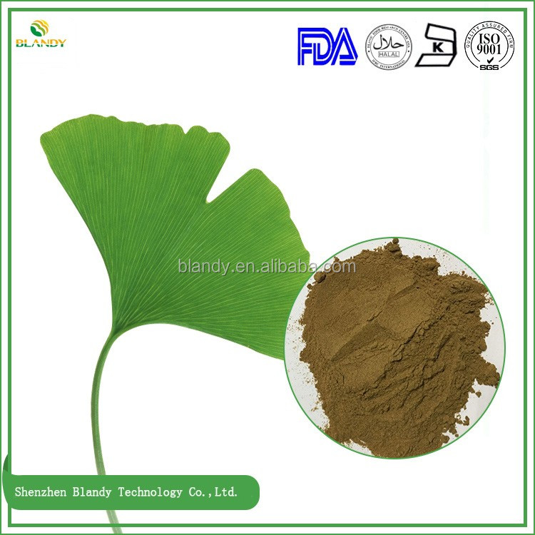 High Quality pure natural ginkgo biloba extract