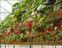Coir Products / Strawberry Crops