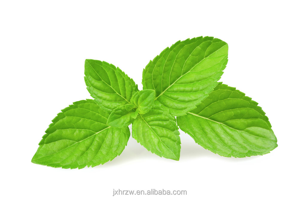 Skin Refresh Peppermint Oil Sale Essential Oils