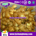 250g Air Dried GInger/Fresh Ginger For UK,CANADA,USA and EU Market