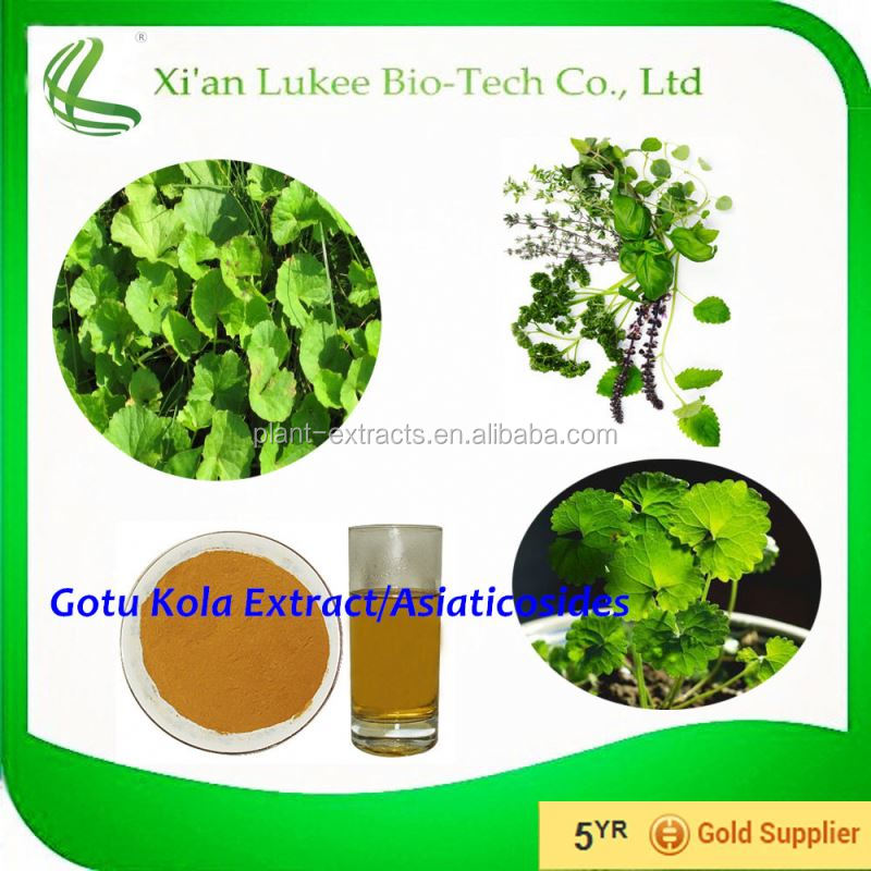 Bulk Supply ISO&Kosher Hydrocotyle asiatica extract/Centella/Gotu Kola Powder 10% Asiaticosides