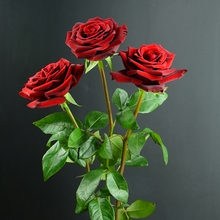 Wholesale different types of fresh cut flowers black roses for sale