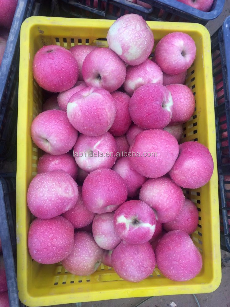 2016 hot sale qinguan bulk fresh apple fruit market prices apple for sale