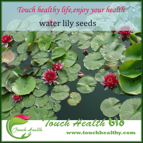2017 water lily seeds water nymph seeds