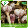 2015 Chinese fresh garlic, 20 years professional experience