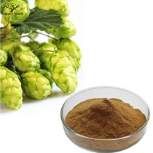 European Hop Flower Extract / Humulus Lupulus Extract