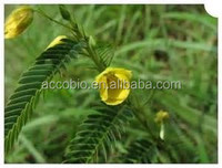 Top Quality Nomame Semaherb extract / Cassia nomame (sieb.) L.Kitagawa