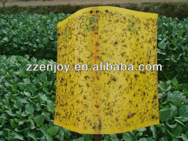 Hot melt glue for insect trap for agriculture and household