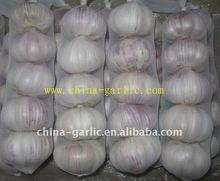 Clove Garlic Product For Wholesale In China--Top Quality&Low Price