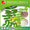 Herbal extract boswellia serrata gum resin