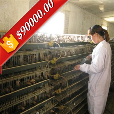 500 dollars coupon Factory Quail Layer Cages for sale