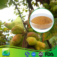 100% Pure Natural Best Quality Chinese Gallnuts Gallnut