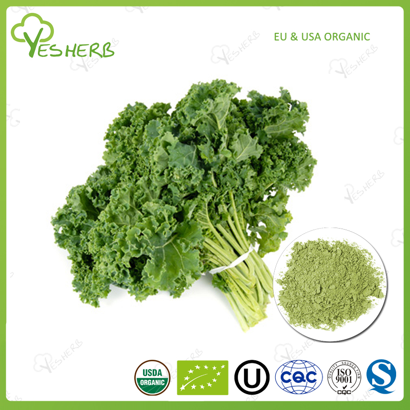 100% natural vegetable powder kale extract kale leaf for foods