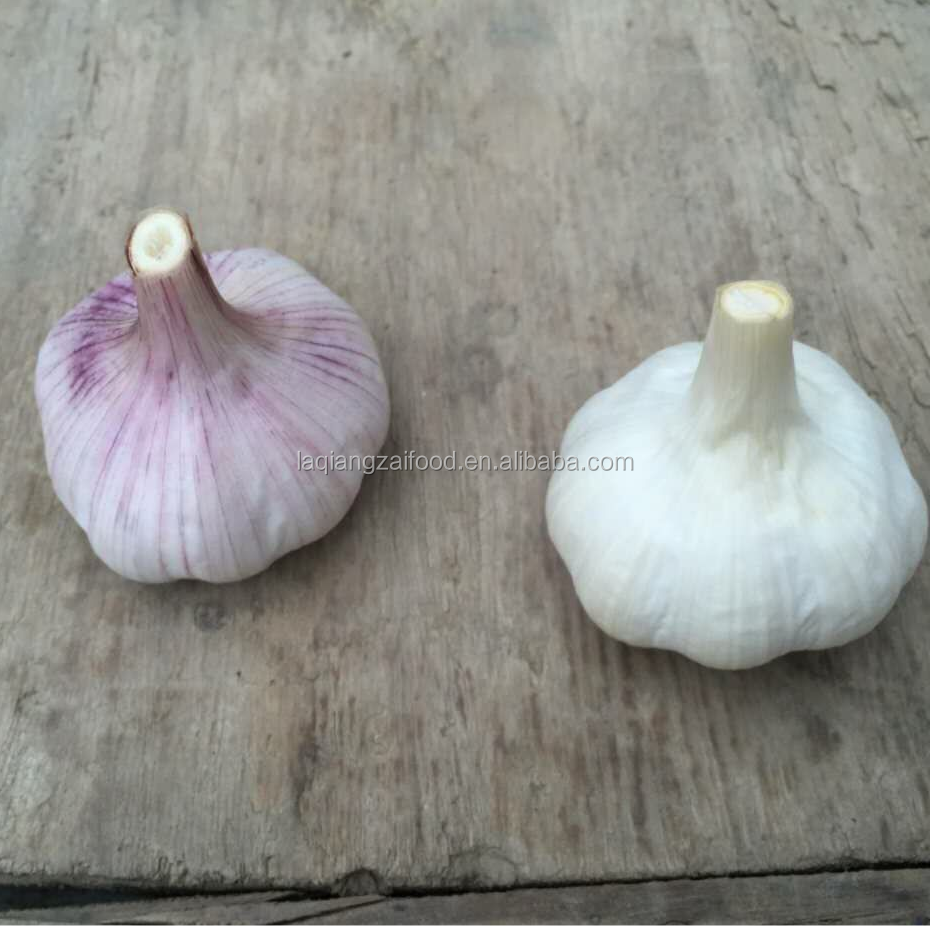 Chinese fresh Pure white and Normal white Garlic with carton and net packing