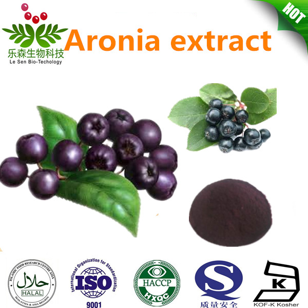 Antioxident aronia extract/choke berry extract
