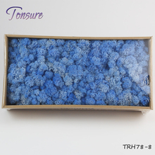 High quality 500G Per Box artificial decorative moss preserved moss for moss wall decoration