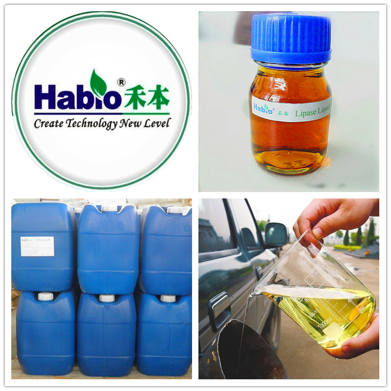 biodiesel specialized indsutrial lipase