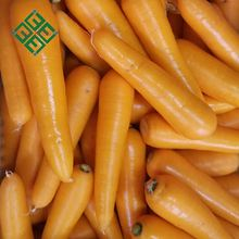 Direct From Factory cheap carrot price 10kg carrot