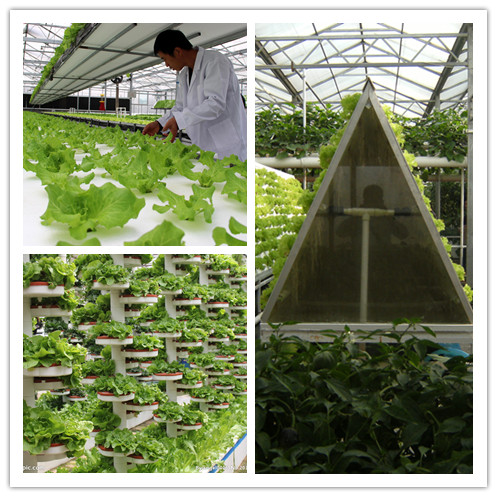 complete hydroponic system clean and pollution free organic vegetable liquid fertilizer