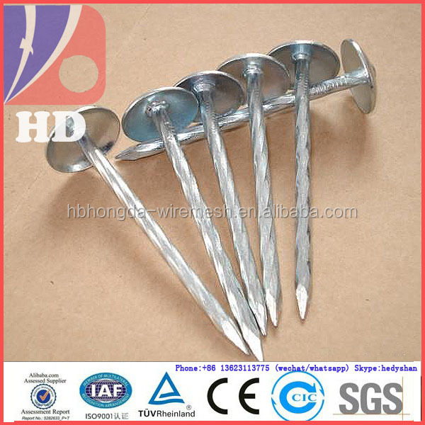 Corrugated dome umbrella head hardware galvanized roofing Nail