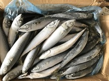 Hot selling Sea Frozen pacific mackerel fish with whole round exported from China