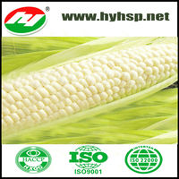 High Quality White Corn from China