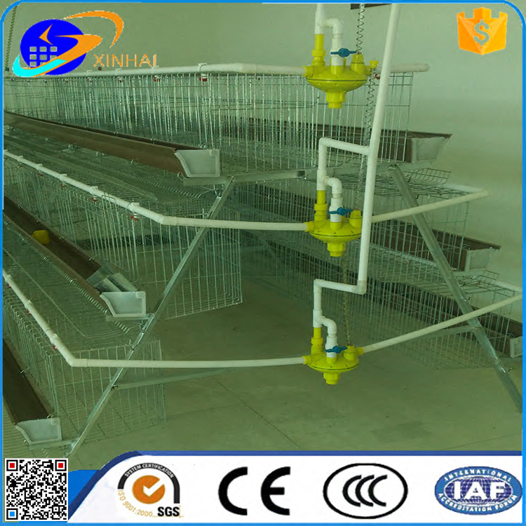 hot sale layer poultry cage 120 Capacity in Philippines market