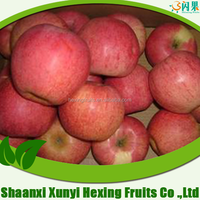 2015 New Crop fresh Qinguan Apple, sweet red Qinguan Apple Fruit