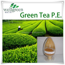 Natural Healthy Supplement 98% Polyphenols Green Tea Extract