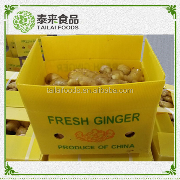 Different package Chinese ginger fresh ginger for sale and ginger