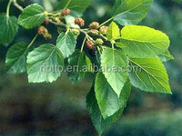 mulberry leaf extract best quality & competitive price 100% nature 1-deoxynojirimycin (DNJ)
