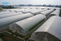 Galvanized Steel Structure Greenhouse For Agriculture Covered By Polythene Film