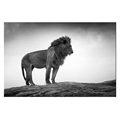 Custom Animal Photo Printing Canvas Art Home Decoration Fashion Black And White Lion Picture Room Decor