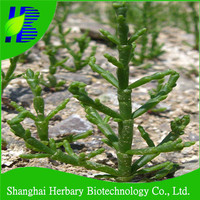 2016 Bulk salicornia seeds for sale