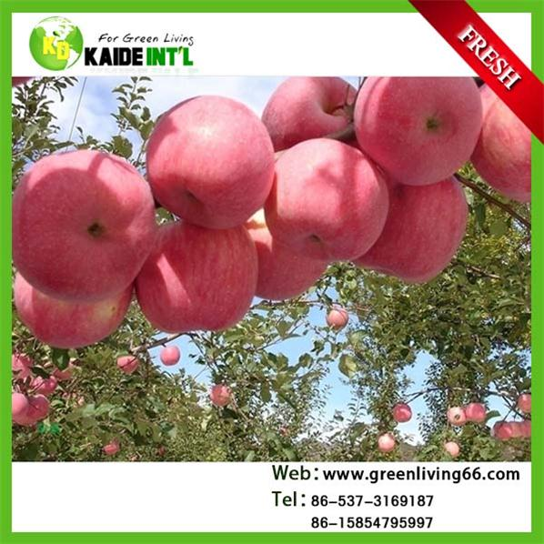 Fresh Sweet Fuji Apple Exporter In China With Wholesale Price