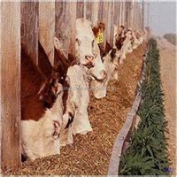 cattle feeds bulk feeds organic