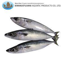 Hot selling land light catching whole round aquatic products mackerel fish