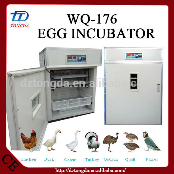 Hot selling boiled quail egg peeling machine with low price