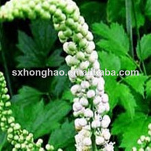 Natural Plant Extract Herble Extract Black Cohosh Extract