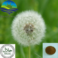 Favorites Compare Factory price dandelion extract, taraxacum extract, Flavone/Flavonoids 3%-20%