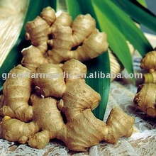 Chinesereenfarm Fresh Yellow Color Ginger