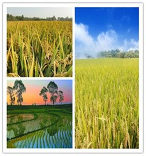 rice straw pulp or dietary fiber with good quality and low price
