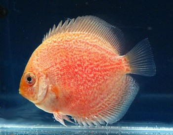 Live fish for sale buy live fish for sale product on for Order fish online