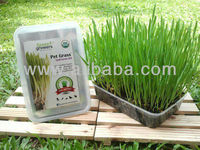 Pet Grass - Self Grow Kit