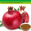 Pure natural pomegranate juice powder