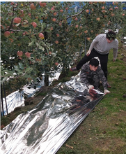Reflective agriculture fruit plastic mulch film