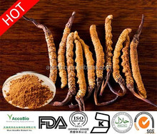 100% natural Cordyceps Extract, Cordyceps Sinensis Extract, powerful herb