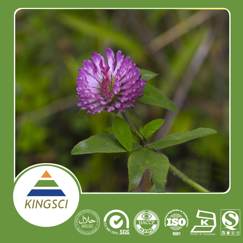 High Quality Red Clover Extract 20% 40% Isoflavones Bulk Powder